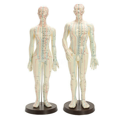 20'' Male & Female Human Body Acupuncture Model - Pressure Point and Meridians