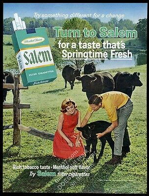 1965 Black Angus cattle cow herd calf photo Salem cigarettes vintage print ad