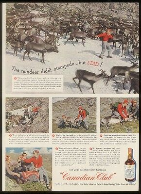 1947 Sweden reindeer herd photo Canadian Club whisky ad