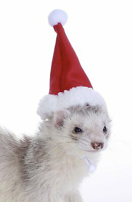 Marshall Pet Ferret Christmas Theme Holiday Santa Hat. Free Shipping To Usa Only