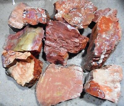 Arizona Rainbow Petrified Wood-10+ Lbs--10 PC