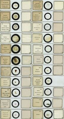22 Numbered Microscope Slides by I.D. Moller
