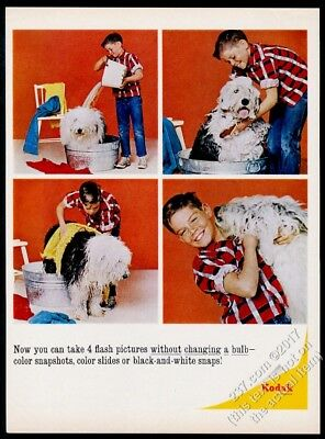 1964 Old English Sheepdog 4 photo getting bath Kodak camera vintage print ad