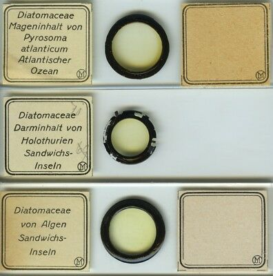 3 Diatom (Atlantic Ocean) Microscope Slides by I.D. Moller