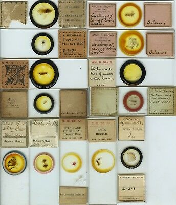 13 Insect Microscope Slides by American Makers