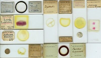 9 Disease (bacteria) Microscope Slides by American Makers