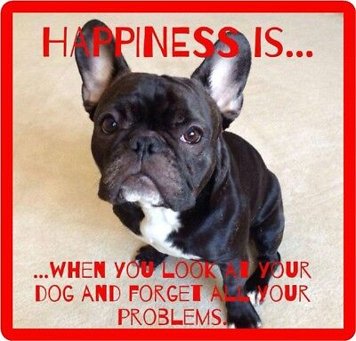 French Bull Dog Happiness Refrigerator / Tool Box  Magnet Gift Card Insert