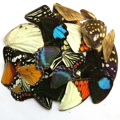 32 REAL BUTTERFLY wing jewelry artwork material ooak DIY gift # 9