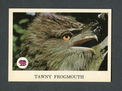 "Scanlens Gum 1967 ""animals Of Australia - #20 Tawny Frogmouth"" Trade Card"