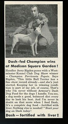 1951 Bull Terrier champion show dog photo Dash dog food vintage print ad