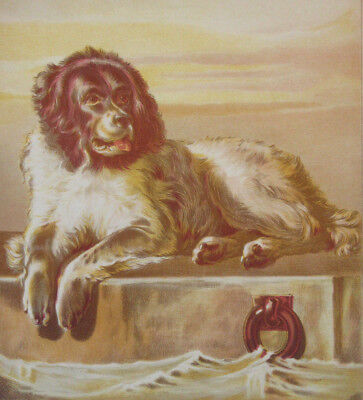 Newfoundland Dog On Pier By Seashore Antique Lithograph 1872 Landseer