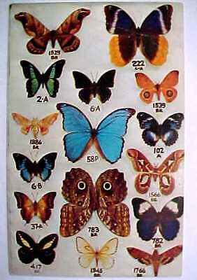 """1950s Real Butterfly Order Card - Postcard """"Jewels of the Sky"""""""