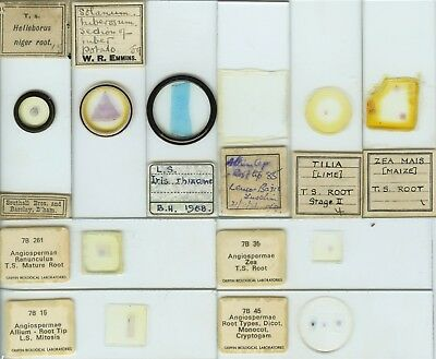 10 Plant Root Microscope Slides by Various Makers