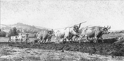 CATTLE COWS OXEN PLOUGH WORKERS FARM FIELD ~ 1877 ROSA BONHEUR Art Print ETCHING