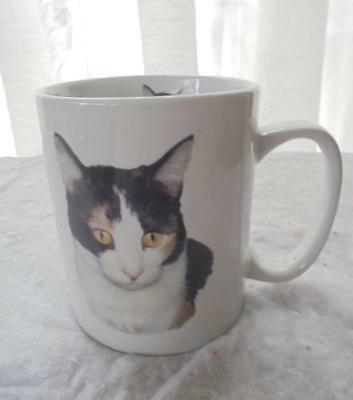 Callico Cat Large Ceramic Mug Photo And Pedigree Excellent