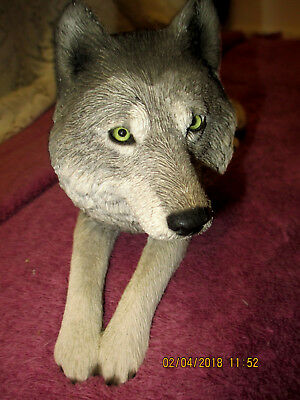 Signed Sandicast Realistic Original Size Lying Gray Wolf Sculpture Glass Eyes!!