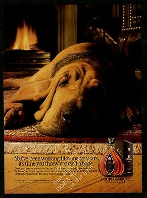 1989 bloodhound photo CUTE sleeping by fireplace Courvoisier XO cognac print ad