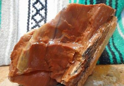 Arizona Rainbow Petrified Wood