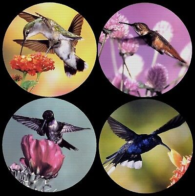Hummingbird Photo Colorful Drink Coasters Polyester Top Rubber Bottom Set of 4