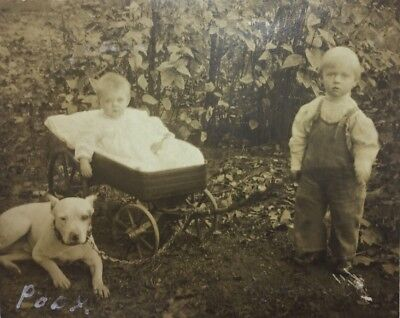 Antique Real Photo Of Pit Bull Terrier Dog W/baby &little Boy Trimmed Rppc