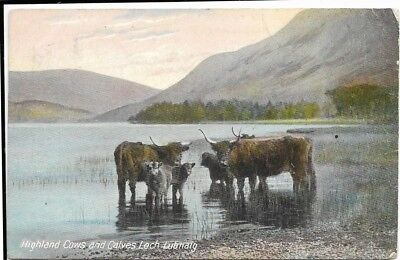 Old Postcard-LOCH LUBNAIG-HIGHLAND COWS AND CALVES-Scotland.
