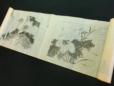 LOTUS FLOWER Japanese Painting Scroll 12 Pictures Hand Drawing EDO Antique *867