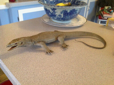 """Replica AAA Toys Lifelike 25"""" MONITOR LIZARD Molded Solid PVC Rubber EXCELLENT"""