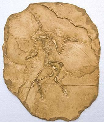 MOULAGE FOSSILE  ARCHAEOPTERYX Reproduction PREHISTOIRE Fossil cast prehistoric