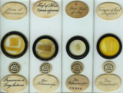 4 Interesting Animal Microscope Slides (for polariscope) by E. Wheeler & Watson