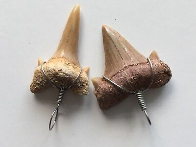 +FREE tooth pendant-Shark Fossil Teeth - 30g (That's approx 30-35+ pieces).