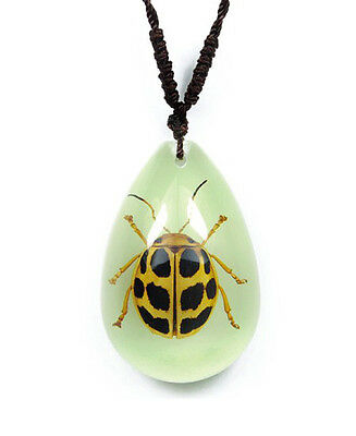 Glow In The Dark Lucite Teardrop Necklace w/ REAL Spotted Leaf Beetle YD0726