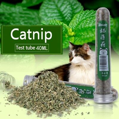 40ml Pet Natural Catnip Cat Kitten Menthol Flavor For Interactive Teeth Vitamin