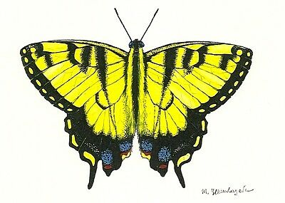 5x7 inch  PRINT OF PAINTING TIGER SWALLOWTAIL BUTTERFLY INSECT RYTA REALISM ART