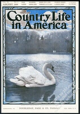 Country Life in America August 1904 framing cover beautiful swan photo