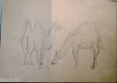 CAMELS page with drawings from the album of Russian artist A.M.Gromov