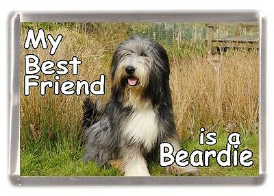 "Bearded Collie Dog Fridge Magnet ""My Best Friend is a Beardie"" - by Starprint"