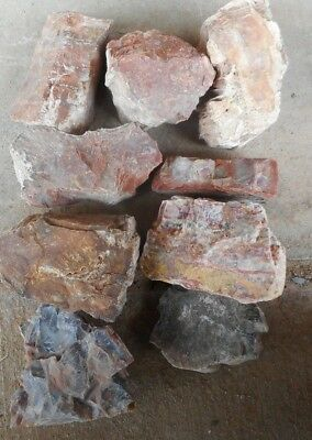 Arizona Rainbow Petrified Wood-10+ Lbs-Collect or for Your Lapidary Shop-9 PC