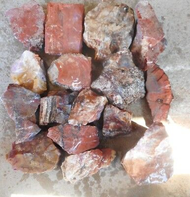 Arizona Rainbow Petrified Wood-10+ Lbs-Collect or for Your Lapidary Shop-16 PC