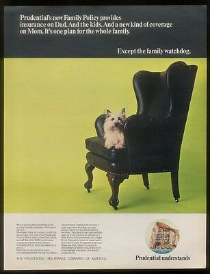 1968 Australian Terrier photo Prudential insurance ad
