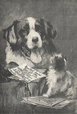 Early Newfoundland Dog With Terrier Dog Antique Art Print 1894