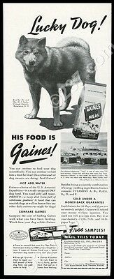 1942 Alaskan Malamute photo Antarctica Dog Town Gaines dog food vintage print ad