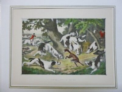 Hunting - Death of the Fox  Lithographie Jagd Fuchsjagd Hunde