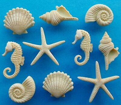 BEACH BEAUTIES - Star Fish Seahorse Seashell Sea Shell Dress It Up Craft Buttons