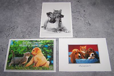 Lot De 3 Cartes Postales - [ Chiens Et Chats ]
