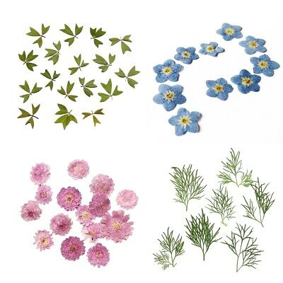 PACK 10Pcs Small Pressed Real Dried Flowers Leaves DIY Jewelry Card Album