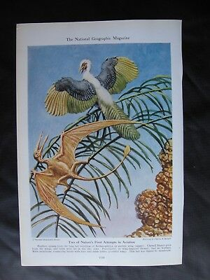 1942 Dinosaur prints by Charles R. Knight - ARCHAEOPTERYX & PTERODACTYL