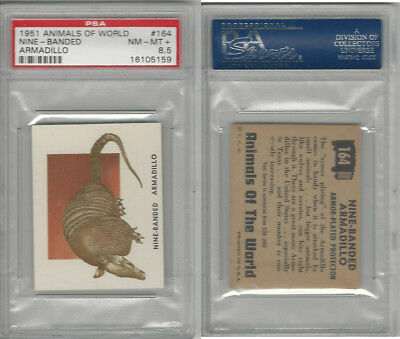 1951 Topps, Animals of the World, #164 Nine-Banded Armadillo, PSA 8.5 NMMT+