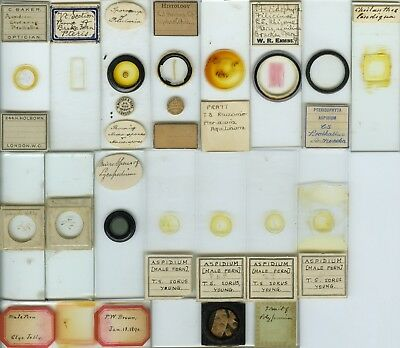 17 Fern Microscope Slides by Various Makers