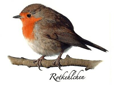 2 Red Robin Rotkehlchen Bird Select-A-Size Waterslide Ceramic Decals Bx