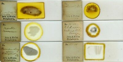 6 Mineral Microscope Frosted Slides by J.A. Shulze (American)